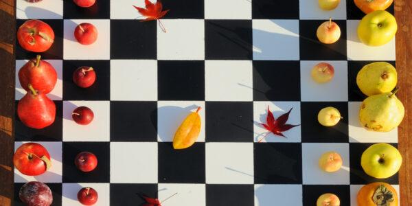Новая сессия ChessWeekend 22.11.19